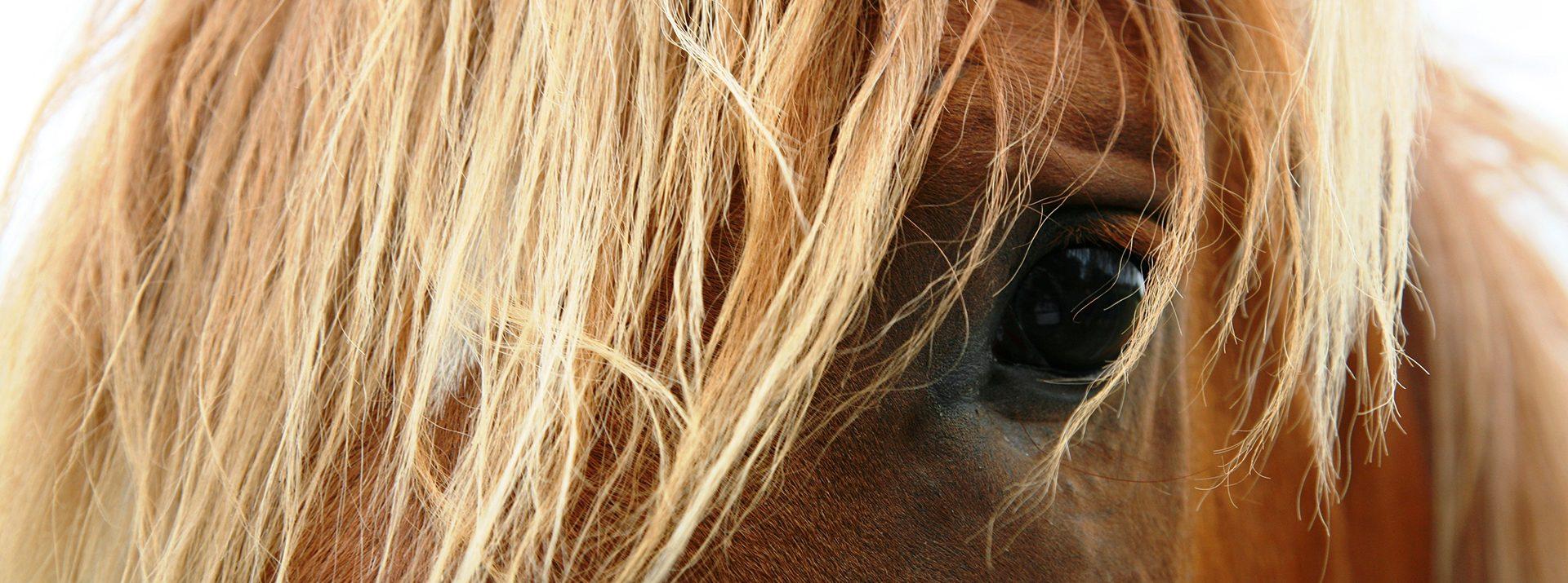 Kutyás, lovas és más állatokkal asszisztált fejlesztőpedagógiai terápiák, mozgásterápiák