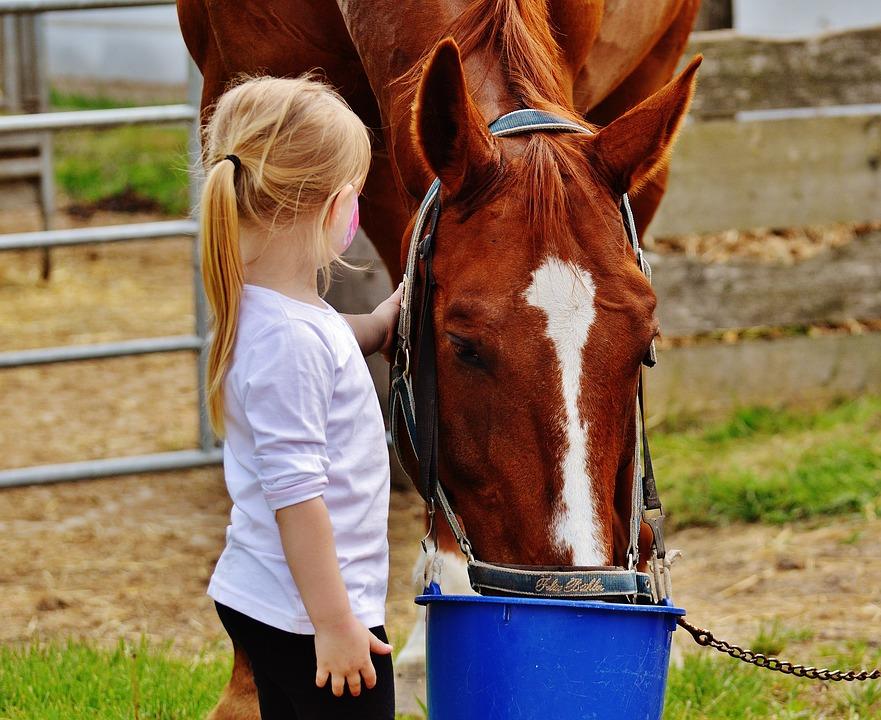 ló és kislány